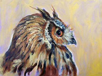 AURELIA: GREAT HORNED OWL